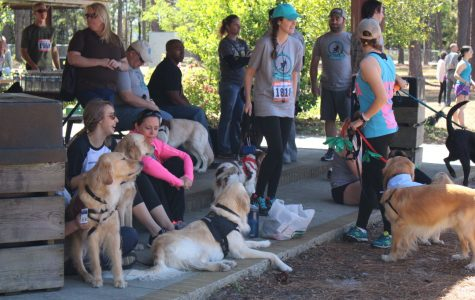 Dogs invade Empie Park to raise money for paws4people