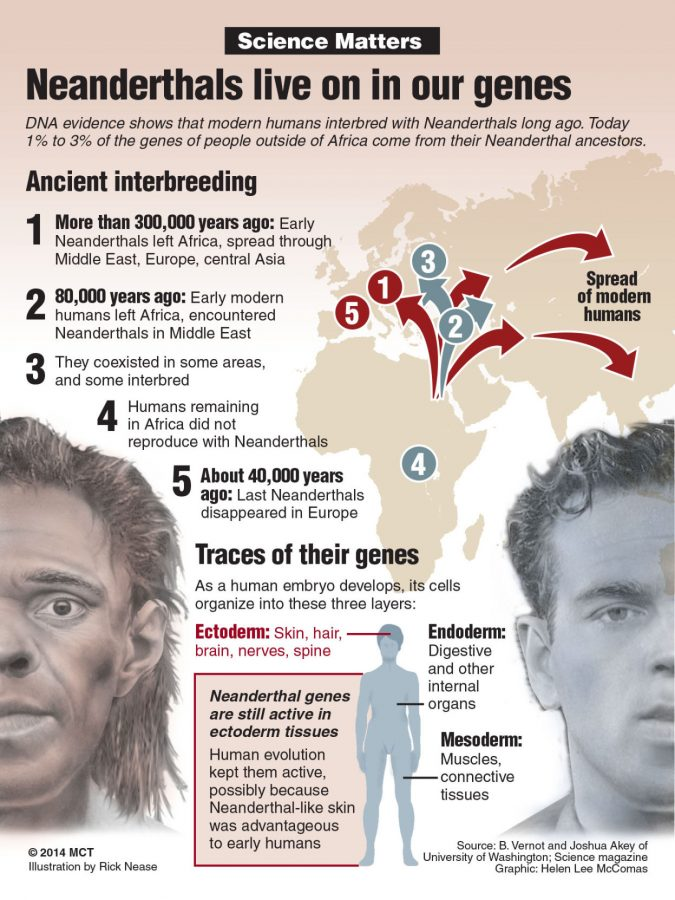 Recent studies show that modern humans share a portion of their DNA with Neanderthals, a primitive hominoid species that thrived during the last Ice Age.