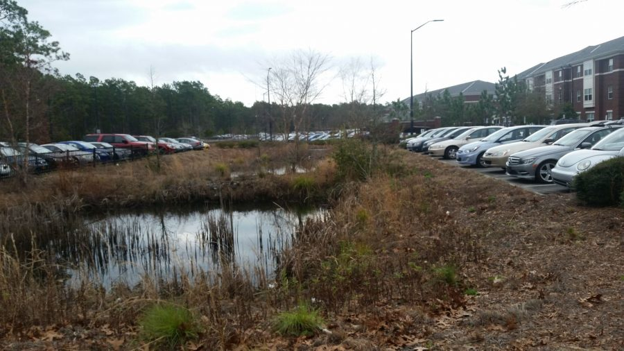 The Seahawk Landing parking lot filled with student cars, days after four cars were broken into by unknown individuals.