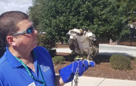 Move over, Sammy, there's a new Seahawk in town