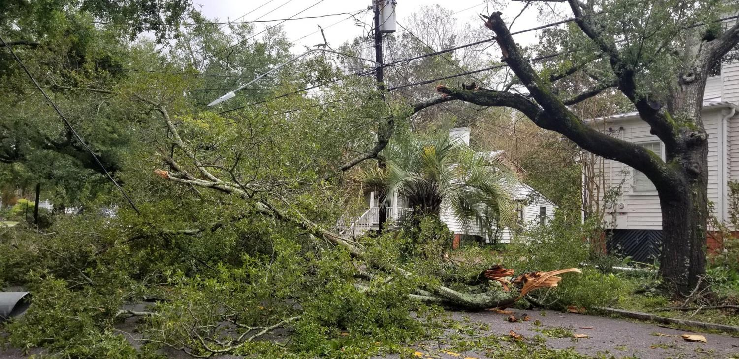 In the area of downtown Wilmington near 4th and Dock Street, fallen trees and damaged power lines were brought as a result of high winds and rain brought by Hurricane Florence.