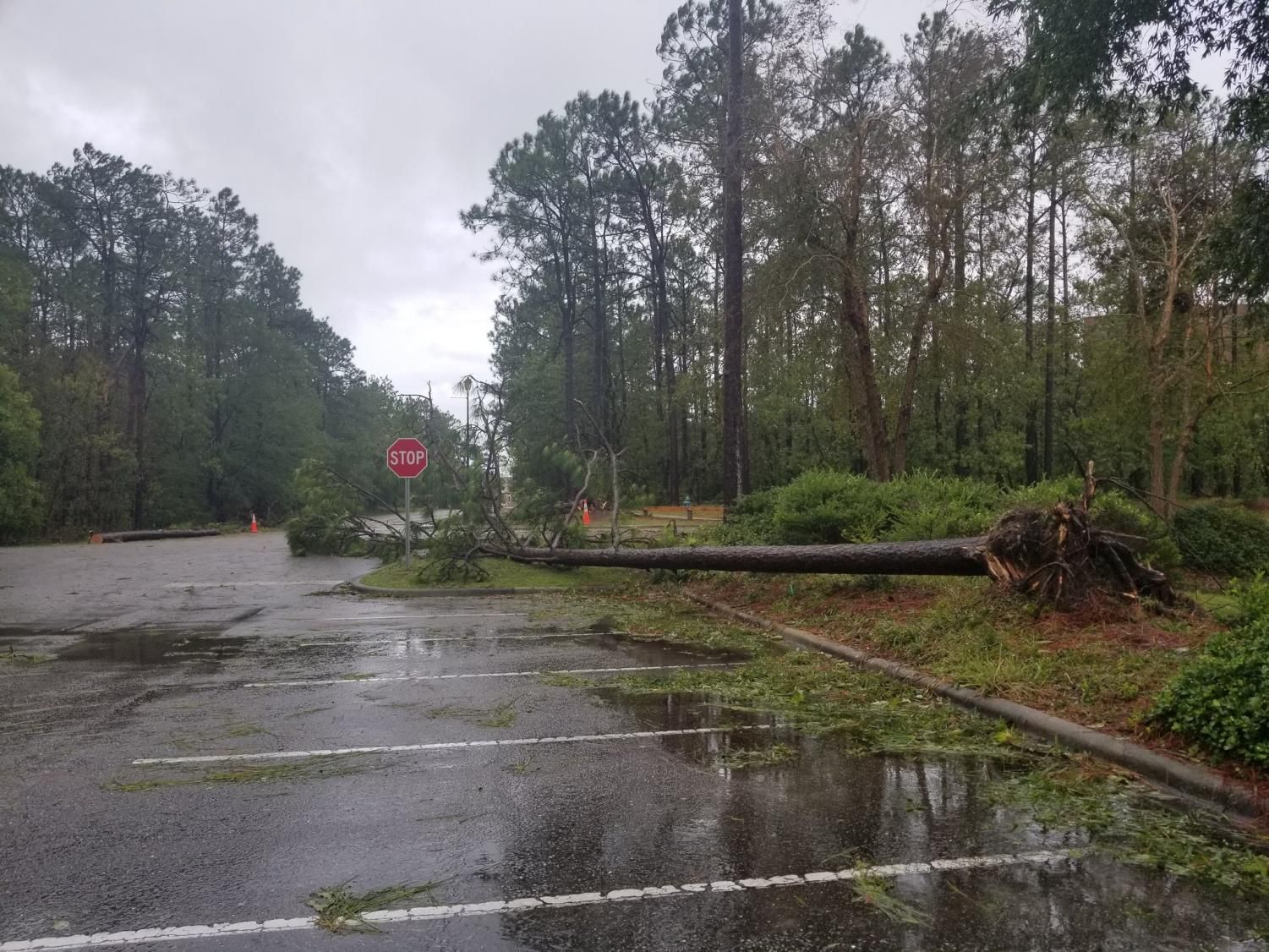 A+fallen+tree+blocks+the+curve+turning+Randall+Drive+into+Reynolds+Drive+on+the+edge+of+UNC+Wilmington%27s+campus.+The+damage+was+a+result+of+high+winds+and+rain+brought+by+Hurricane+Florence.