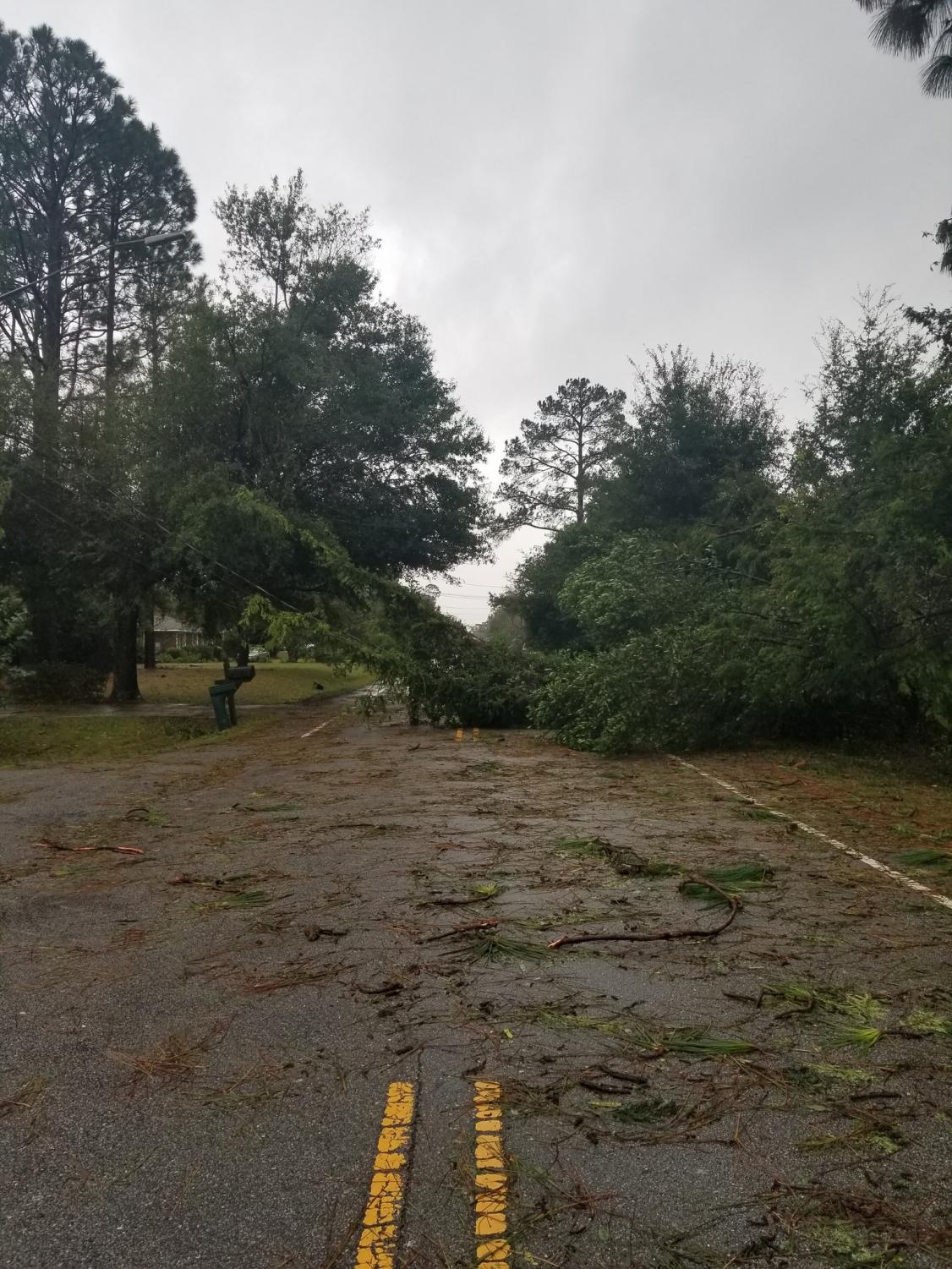Trees+block+Wood+Dale+Drive+just+off+UNC+Wilmington%27s+campus+as+a+result+of+high+winds+and+rain+brought+by+Hurricane+Florence.