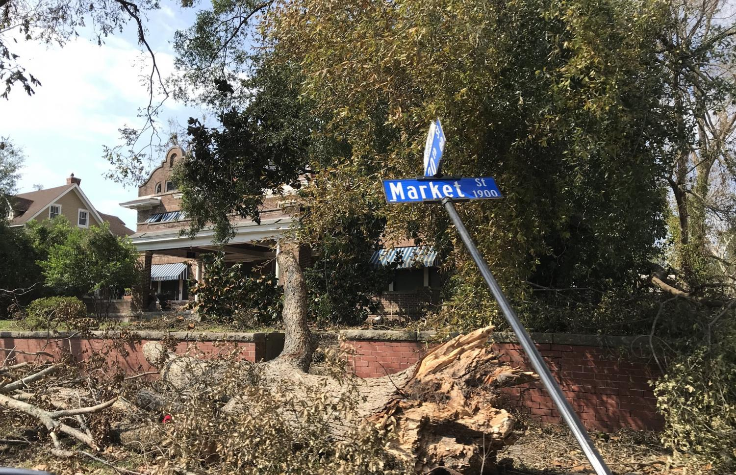 Tree and street sign damage in downtown Wilmington at Market st and 20th st.
