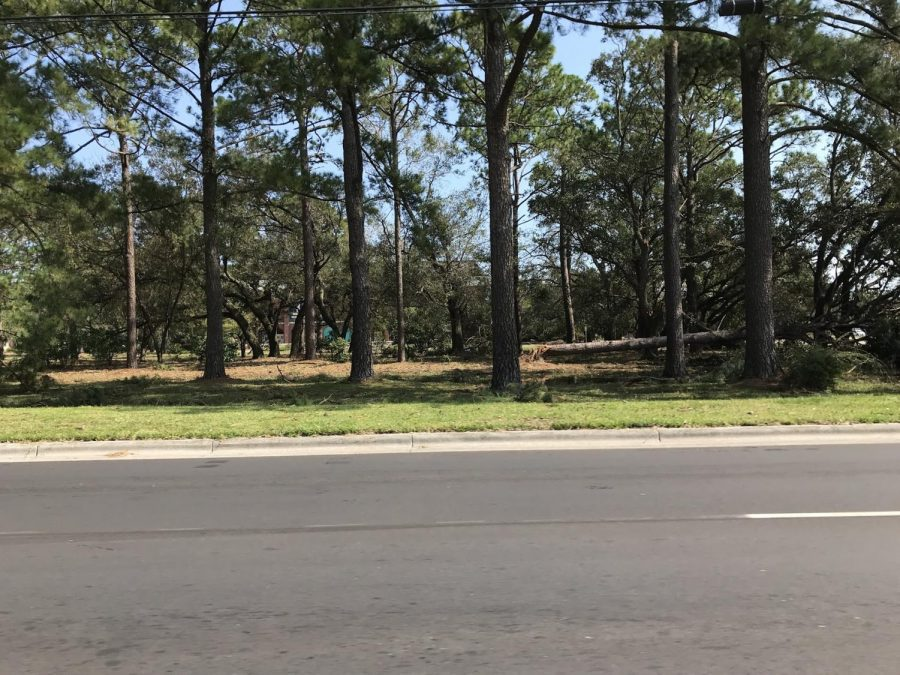 Tree+damage+at+the+front+of+UNCW%27s+campus.