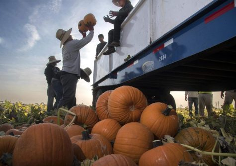 You can still have fun while safely celebrating fall and Halloween this year
