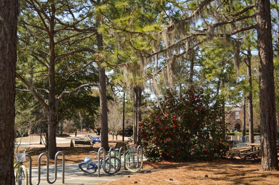 Trees and bikes on campus.