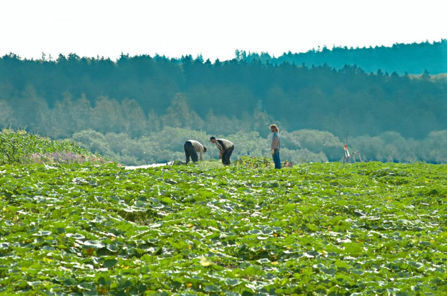 The reality for North Carolina migrant farmworkers